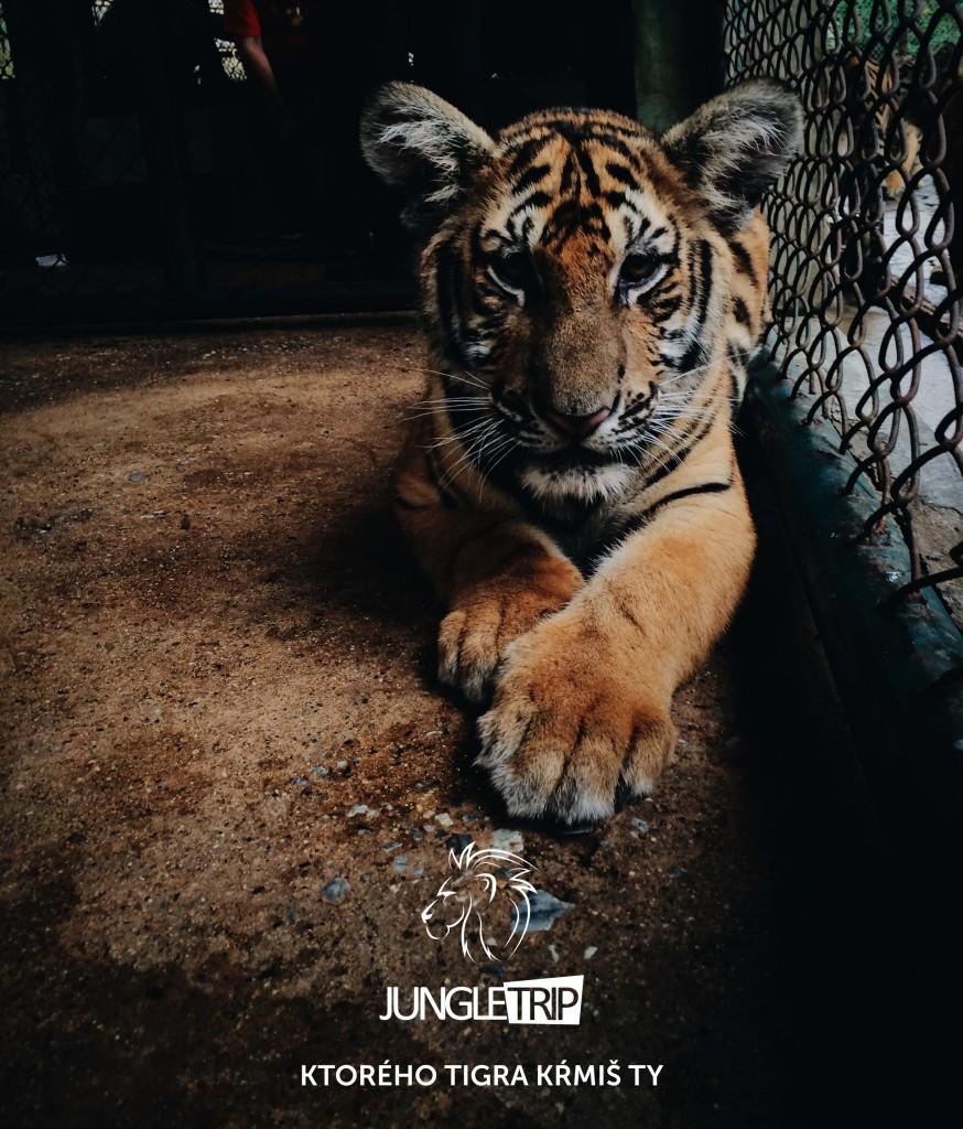 krmenie tigra v reklamnej džungli